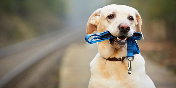 Einkommenssteuer und Hunde